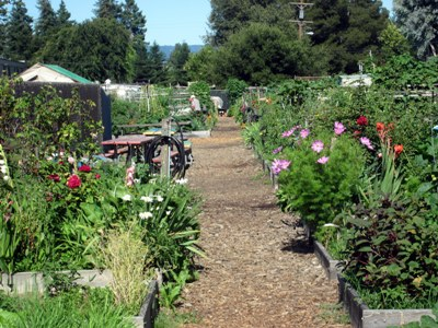 Awesome The Senior Center Community Garden Serves The Senior Community Of Mountain  View. Located Down The Street From The Mountain View Senior Center, ...
